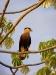 Pantanal_lowres (11).JPG