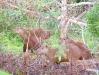 Pantanal_lowres (14).JPG