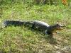 Pantanal_lowres (15).JPG