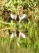 Pantanal_lowres (16).JPG
