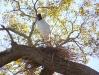 Pantanal_lowres (18).JPG