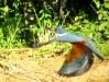 Pantanal_lowres (19).JPG