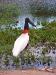 Pantanal_lowres (2).JPG