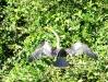 Pantanal_lowres (20).JPG