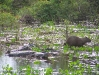 Pantanal_lowres (25).JPG