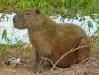Pantanal_lowres (27).JPG