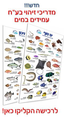 מגדיר זיהוי בעלי חיים ימיים