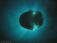 הים התיכון מתחת למים