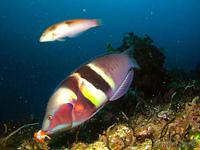 ניו-זילנד מתחת למים
