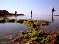 חופי הים התיכון