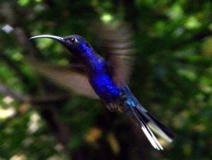 בעלי חיים בקוסטה ריקה