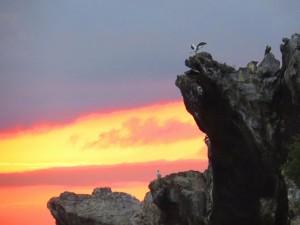טבע בגלפגוס