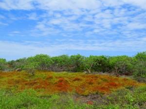 פריחה אדומה באי סימור הצפוני
