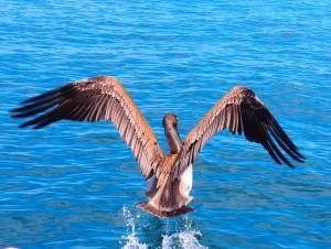 צלילה באיי גאלאפגוס