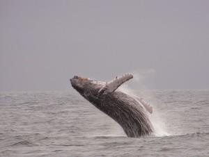 מפגש עם לווייתן