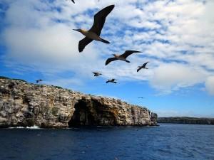 ספארי צלילה באיי גלפגוס