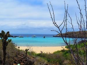 האי סנטה פה באיי גלפגוס