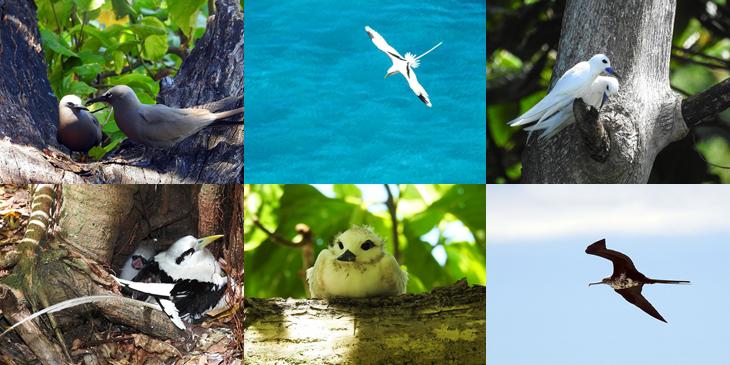 עופות ימיים באי אריד בסיישל