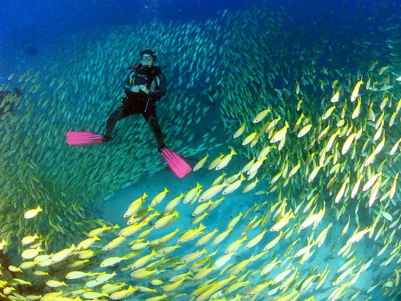 צלילה בגן עדן סיישל