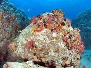 אלמוגים רכים בסיישל