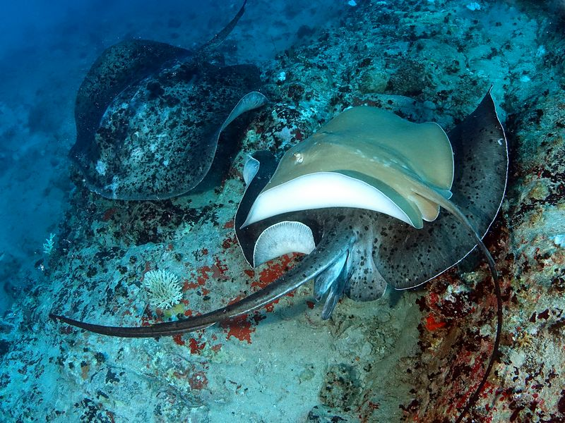 אורגיית חתולי ים בסיישל