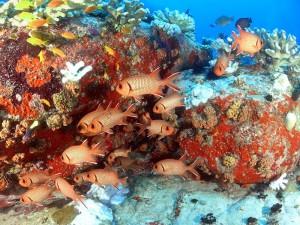 ספארי צלילה בסיישל